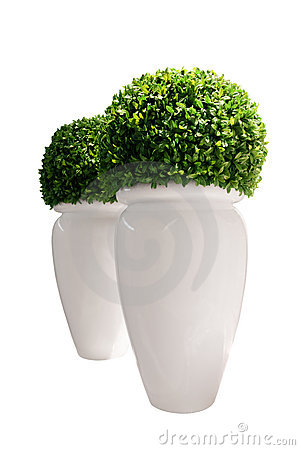 Free Vases With Buxus Isolated On White Background Royalty Free Stock Photos - 9354298