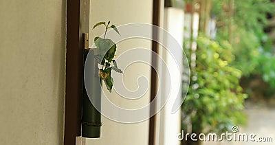 Vaso de bambu no jardim japonês em Hokokuji em Kamakura handheld video estoque