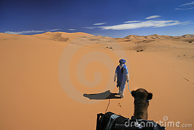 Vast desert camel adventure Stock Photo