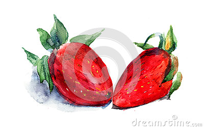 Vattenfärgillustration av jordgubben