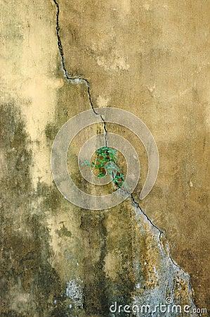 Vecchia priorità bassa dei mura di cemento del abstrct