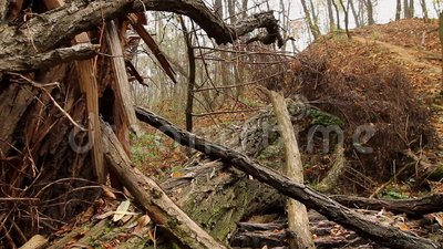 Vecchio albero rotto video d archivio