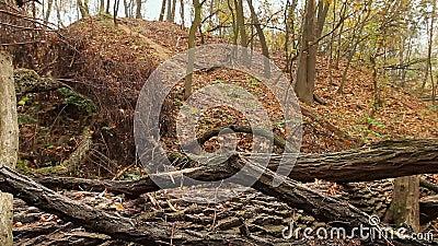 Vecchio albero rotto archivi video