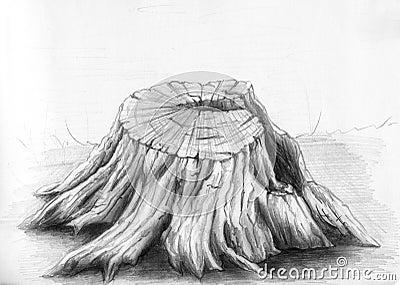 Vecchio ceppo di albero - abbozzo