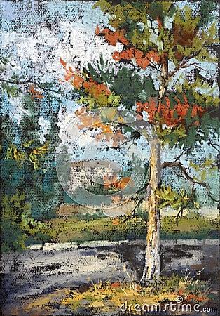 Vecchio pino-albero all indicatore luminoso di tramonto