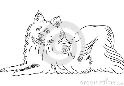 vector American Eskimo Dog breed lying