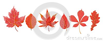 Vector autumn watercolor style seasonal Fall maple cherry chestnut mulberry tree red orange leaves drawn forest leaf. Greeting po Vector Illustration