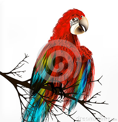 Colorful  vector realistic tropical bird sit a branch on white
