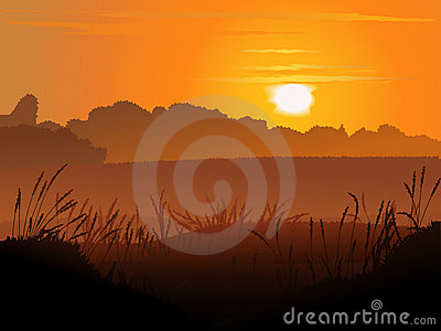 Vector backround of field in sunset.