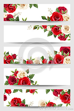 Free Vector Banners With Red And White Roses. Royalty Free Stock Images - 51032099
