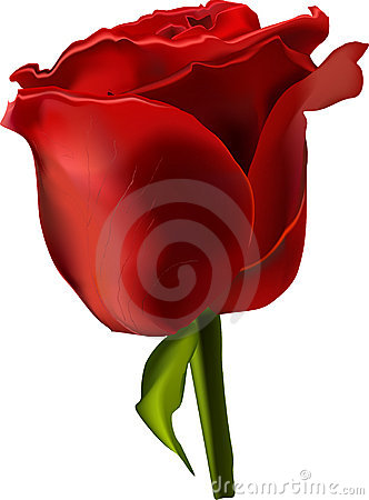 Vector beautiful red rose