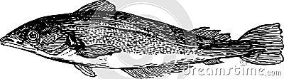 Overzeese vissen