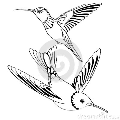 Vector birds in black and white