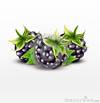 Free Vector Blackberries  On White Background Stock Photo - 74682180