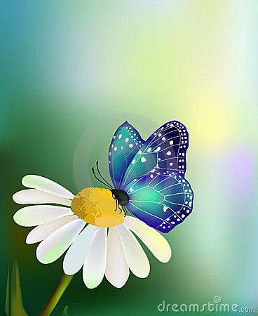Vector blue butterfly on the daisy-flower