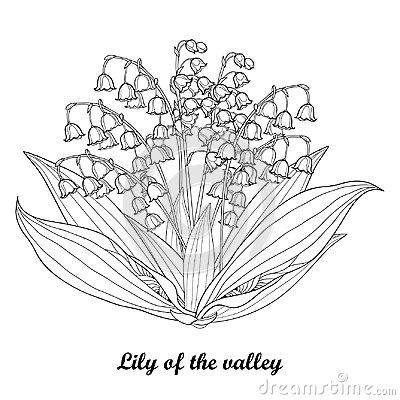 Free Vector Bouquet With Outline Lily Of The Valley Or Convallaria Flower And Leaf In Black Isolated On White Background. Royalty Free Stock Photography - 106341497