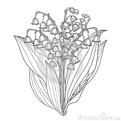 Free Vector Bouquet With Outline Lily Of The Valley Or Convallaria Flowers And Leaves Isolated. Floral Element For Spring Design.i Stock Photos - 87879203