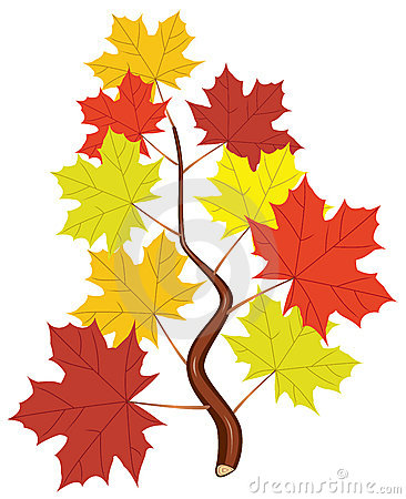 vector branch with fall maple leaves