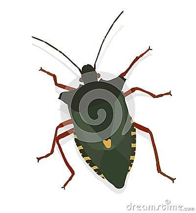 Vector bug