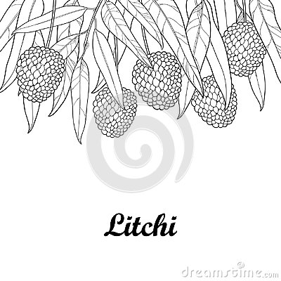 Free Vector Bunch With Outline Chinese Lychee Or Litchi Fruit And Leaf Isolated On White Background. Perennial Subtropical Tree. Stock Photography - 95430642