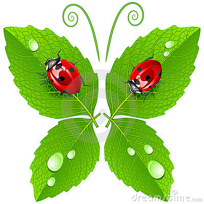Free Vector Butterfly Stock Photo - 9351620