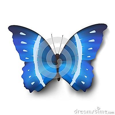 Vector butterfly illustration