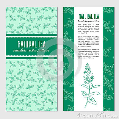 Vector cards, banners with hand drawn mint branch, leaves and flower isolated on white, spicy herb, Doodle cooking Vector Illustration