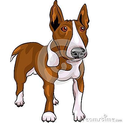 vector Cartoon Bull Terrier Dog breed