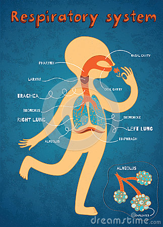 Vector Cartoon Illustration Human Respiratory System Kids Color Anatomy