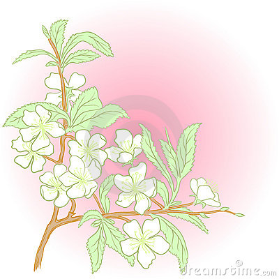 Vector cherry blossom.