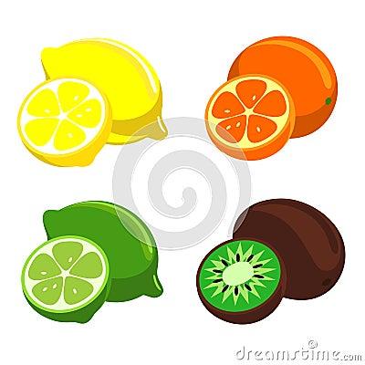 Vector citrus fruit