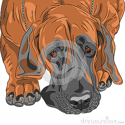 Vector close-up sketch domestic dog Great Dane bre