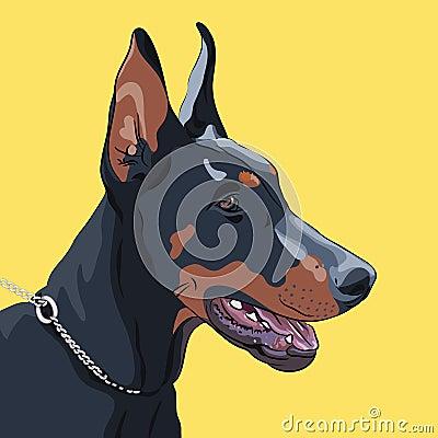 Vector closeup serious dog Doberman Pinscher breed