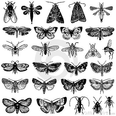 Vector collection of butterfly and insects