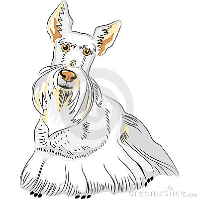 vector Color Sketch Dog Breed Scottish Terrier