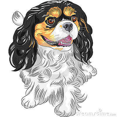 Vector color sketch of the dog Cavalier King Charl