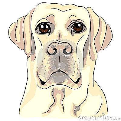 vector Color sketch dog labrador retrievers