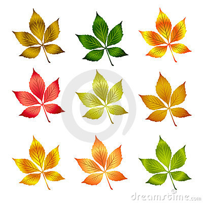 Vector colorful autumn leafs .Autumn background