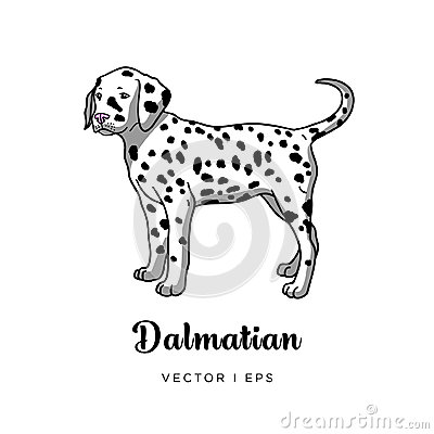Vector colorful image depicting a cute dalmatian puppy dog Stock Photo