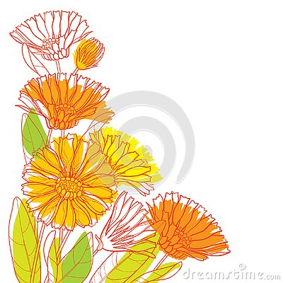 Free Vector Corner Bouquet With Outline Calendula Officinalis Or Pot Marigold, Bud, Green Leaf And Orange Flower Isolated On White. Royalty Free Stock Images - 129763919