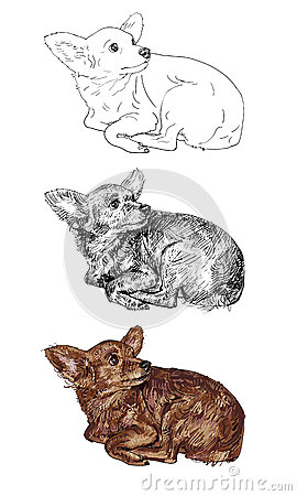 Vector of curious chihuahua