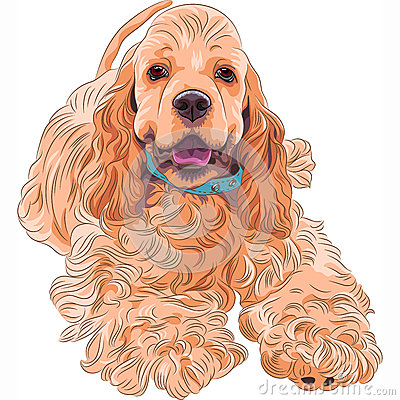 Vector cute sporting dog breed American Cocker Spa