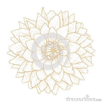 Vector dahlia flower.