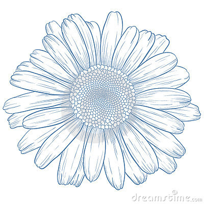 Vector daisy.