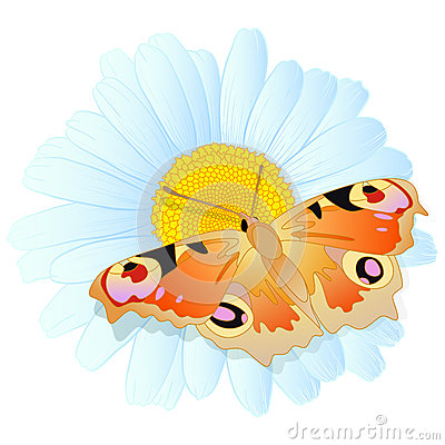 Vector daisy and butterfly.
