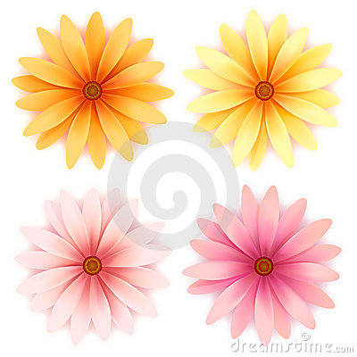 Vector  daisy flowers set  isolated on white