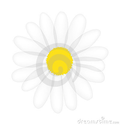 Vector daisy isolated on white background