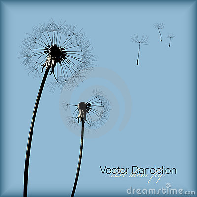 Free Vector Dandelion Royalty Free Stock Photography - 8287707