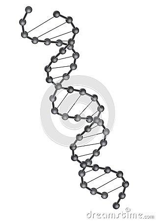 Vector de la DNA