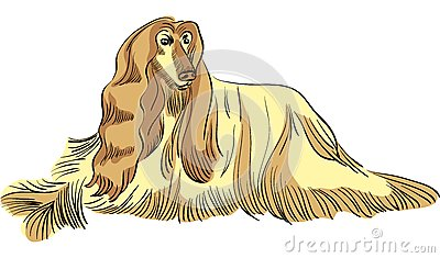 Vector Dog Afghan hound breed color